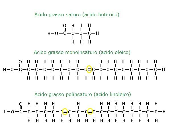 acidi-grassi